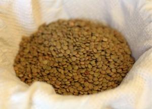 Dry Lentils