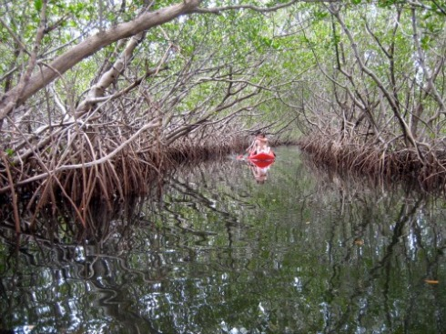 Kayaking at Weedon Island, St Petersburg Florida